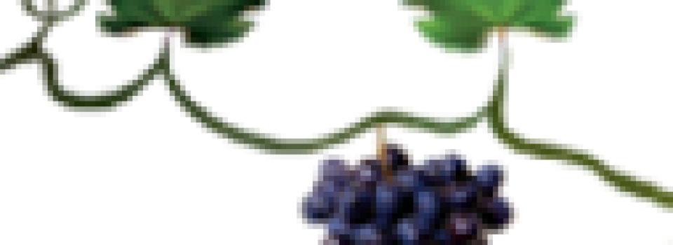 logo_VI Egen2